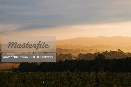 Vineyard, Yarra Valley, Victoria, Australia