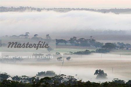 Morning, Avon Valley, York, Western Australia, Australia