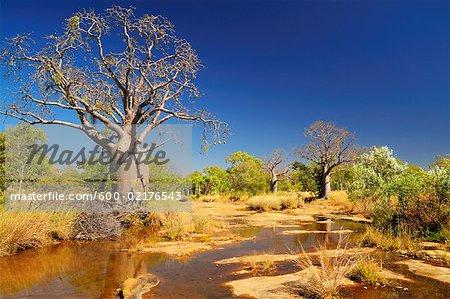 Boab Tree, Kimberley, Western Australia, Australia