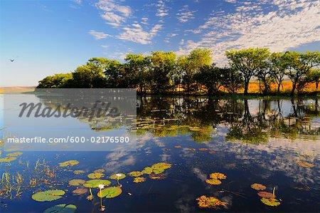Parry Lagoons, Wyndham, Kimberley, Western Australia, Australia