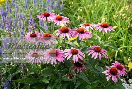 Close-up of Flowers, Royal Botanical Gardens, Ontario, Canada