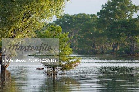 Atchafalaya Basin, Lafayette, Louisiana, USA
