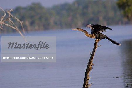 Bird on a Branch, Lake Martin, Lafayette, Louisiana, USA