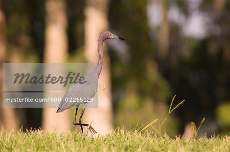 Portrait of Bird, Lake Martin, Lafayette, Louisiana, USA