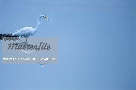 Crane Standing in Lake, Richmond Hill, Georgia, USA