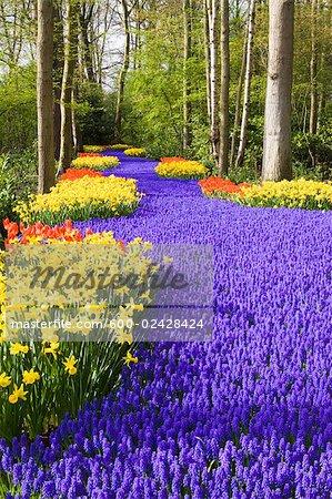 Hyacinths, Daffodils and Tulips, Keukenhof Gardens, Lisse, Netherlands