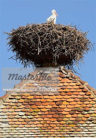 Stork in Nest on Top of Tower, Kaysersberg, Haut-Rhin, Alsace, France