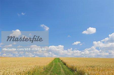 Road Through Cornfield in Summer, Bavaria, Germany