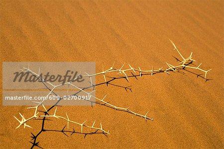 Thorn Bush on Sand,Namib-Naukluft National Park, Namibia