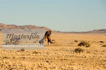 Horses, Aus, Karas Region, Namibia