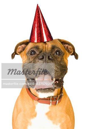 Boxer Wearing Birthday Hat