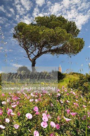Tree and Wildflowers, Costa Blanca, Alicante, Spain