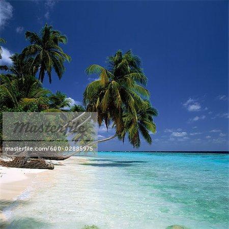 Tropical Seascape, Coconut Palm Trees on Beach