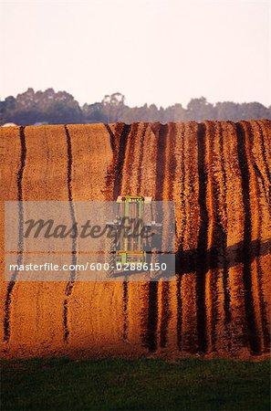 Ploughing Potato Field