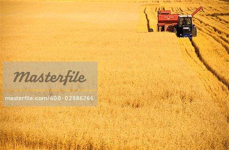 Oats Harvesting, Australia