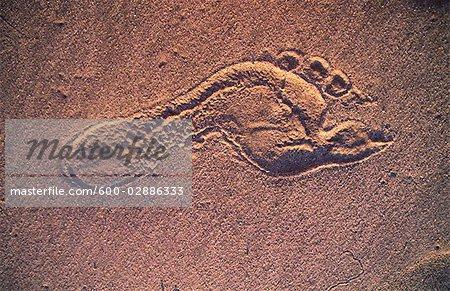 Foot Print in Beach Sand