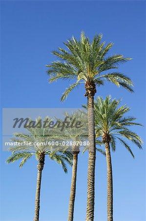 palm trees in las vegas nevada usa stock photo masterfile