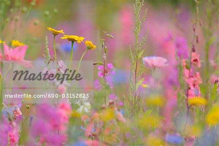 Meadow, Franconia, Bavaria, Germany