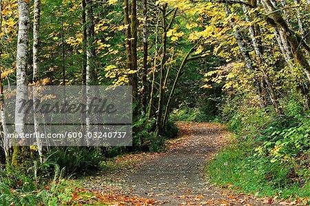 Path Through Rainforest, Stamp Falls Provincial Park, Vancouver Island, British Columbia, Canada