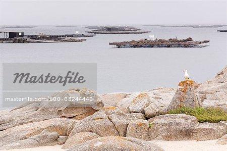Mussel Cultivation Rafts, O Grove, Pontevedra Province, Galicia, Spain
