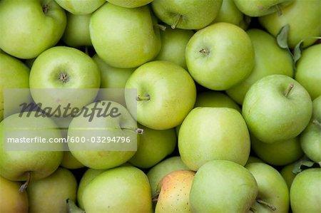 Organic Apples, Penticton, Okanagan Valley, British Columbia, Canada