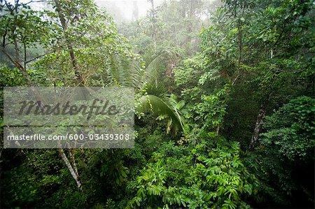 Amazon Rainforest, Sacha Lodge, Ecuador
