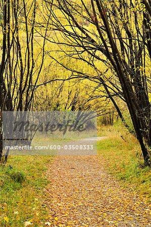 Footpath in Autumn, Arrowtown, Otago, South Island, New Zealand
