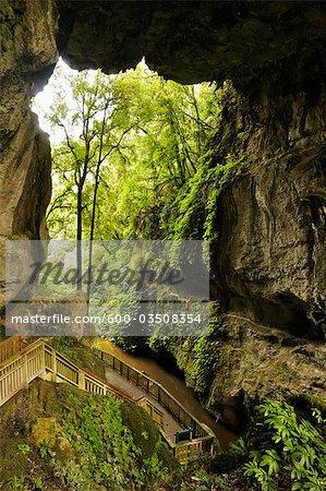 Mangapohue Natural Bridge, Waikato, North Island, New Zealand