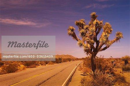 Road and Joshua Tree, Joshua Tree National Park, California, USA