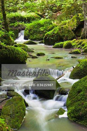 Monbach Creek, Monbach Valley, Black Forest, Baden-Wurttemberg, Germany