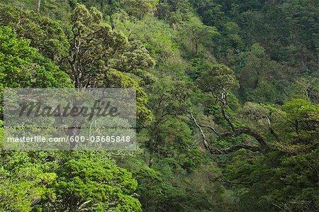 Tropical Rainforest, Miravalles, Cordillera de Guanacaste, Guanacaste, Costa Rica