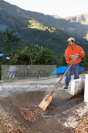 Washing and Drying Coffee Beans, Finca Vista Hermosa Coffee Plantation, Agua Dulce, Huehuetenango Department, Guatemala