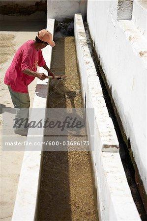 Worker Washing Coffee Beans, Finca Vista Hermosa Coffee Plantation, Agua Dulce, Huehuetenango Department, Guatemala