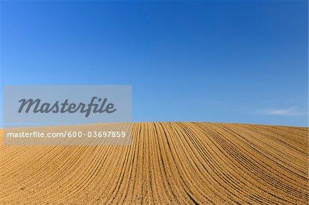 Sowed Field, Reinheim, Darmstadt-Dieburg, Hesse, Germany
