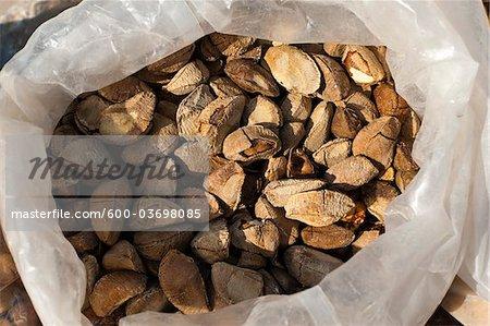 Brazil Nuts, Chuandixia Village, Mentougou District, Beijing, China