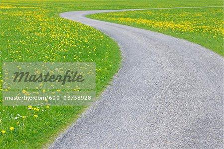 Road through Meadow with Dandelions, Allgau, Bavaria, Germany