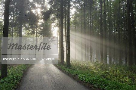 Road with Sunrays through Trees in Spring, Mostviertel, Lower Austria, Austria