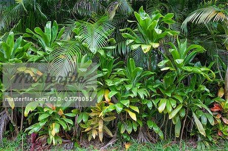 Lush Vegetation, Maui, Hawaii, USA
