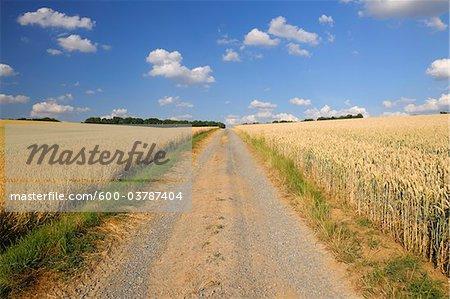 Path Between Wheat Fields, Marktheidenfeld, Franconia, Bavaria, Germany