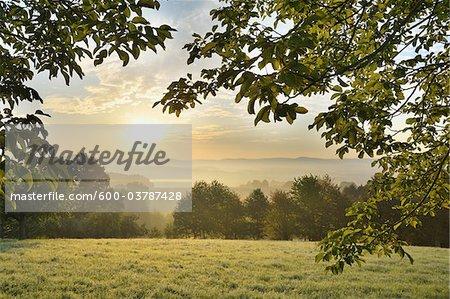 Walnut Tree, Breunsberg, Aschaffenburg, Franconia, Bavaria, Germany