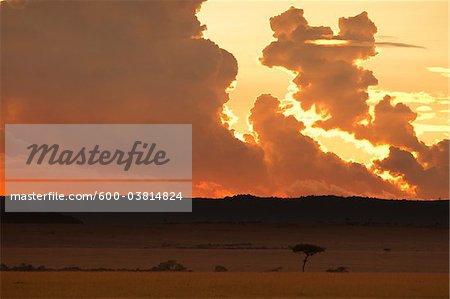 Sunset, Masai Mara National Reserve, Kenya