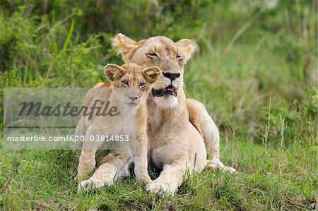 Lion with Cub, Masai Mara National Reserve, Kenya