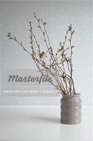 Cherry Blossom Branches In Vase Stock Photo Masterfile Premium