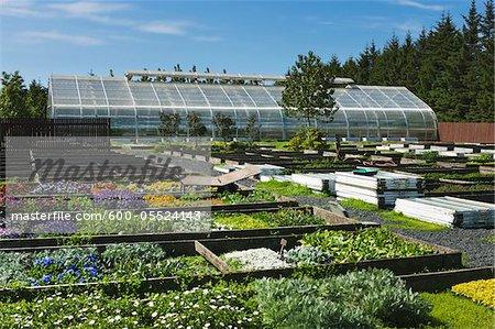 Greenhouse in Flower Farm