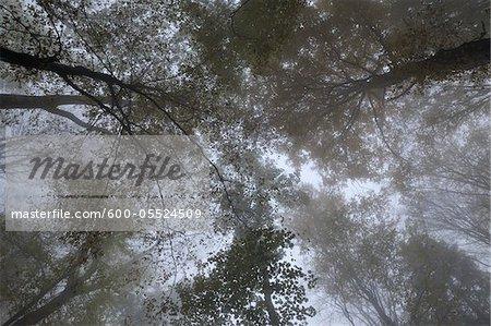 Trees, Rhon Mountains, Hesse, Germany