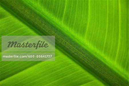 Detail of Palm Leaf, Sunderland Winter Gardens, Tyne & Wear, England