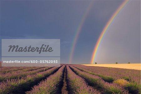 Double Rainbow over Lavender Field, Valensole, Valensole Plateau, Alpes-de-Haute-Provence, Provence-Alpes-Cote d´Azur, France