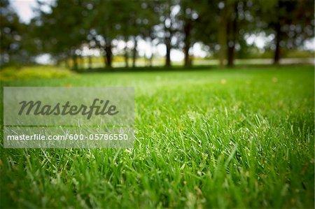 Lawn, Bradford, Ontario, Canada