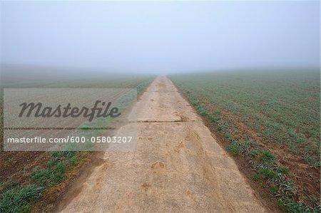 Path on Misty Morning in Early Spring, Marktheidenfeld, Bavaria, Germany