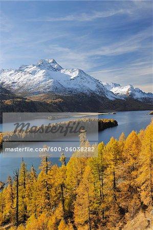 Lake Sils with Trees in Autumn and Piz da la Margna, St Moritz, Maloja District, Engadin, Graubunden, Switzerland